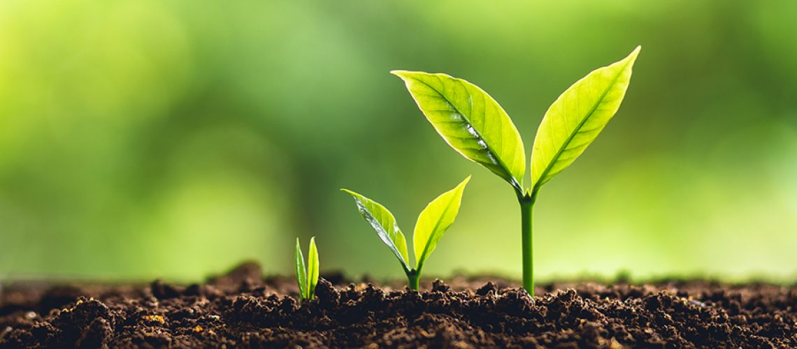 Growth concept image with saplings.